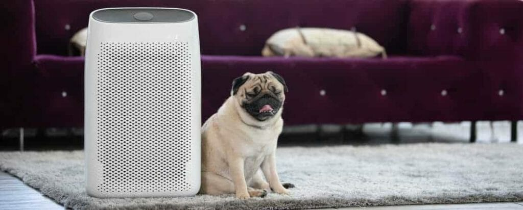 Dog Pug Breed and Air purifier in cozy white Living room