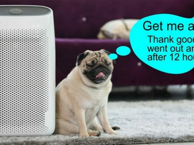 Best Air Purifier for Pets 2021-as cheap as $80 WOOF!